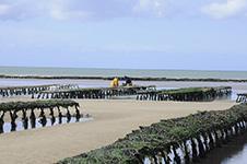 Produitd-de-la-mer-huitres